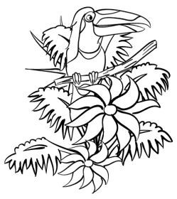 Free Rainforest Coloring Pages Sheets