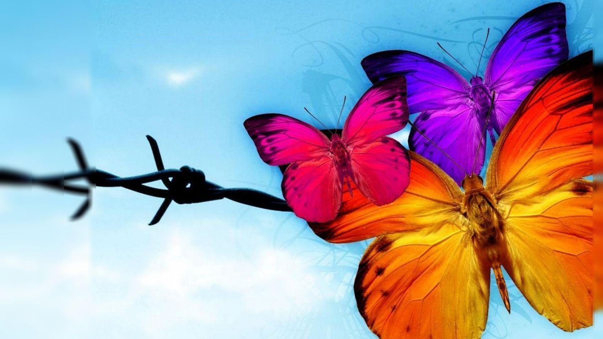 butterfly wallpaper hd free download butterfly wallpaper hd free