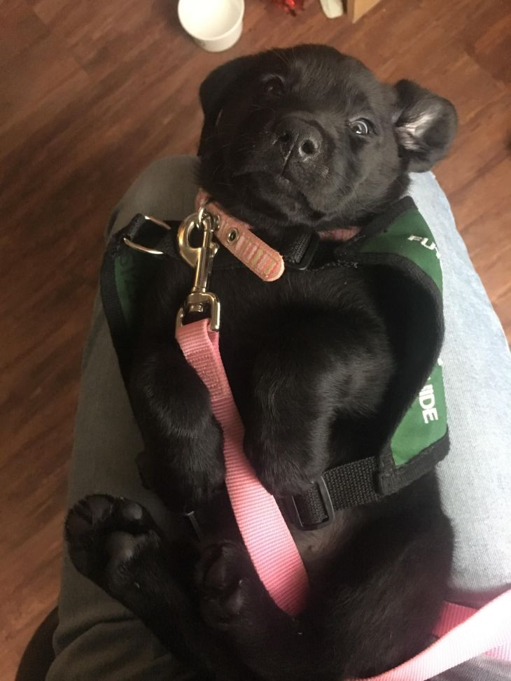 Reddit meet Rumba Future Guide Dog and current goofball Cute