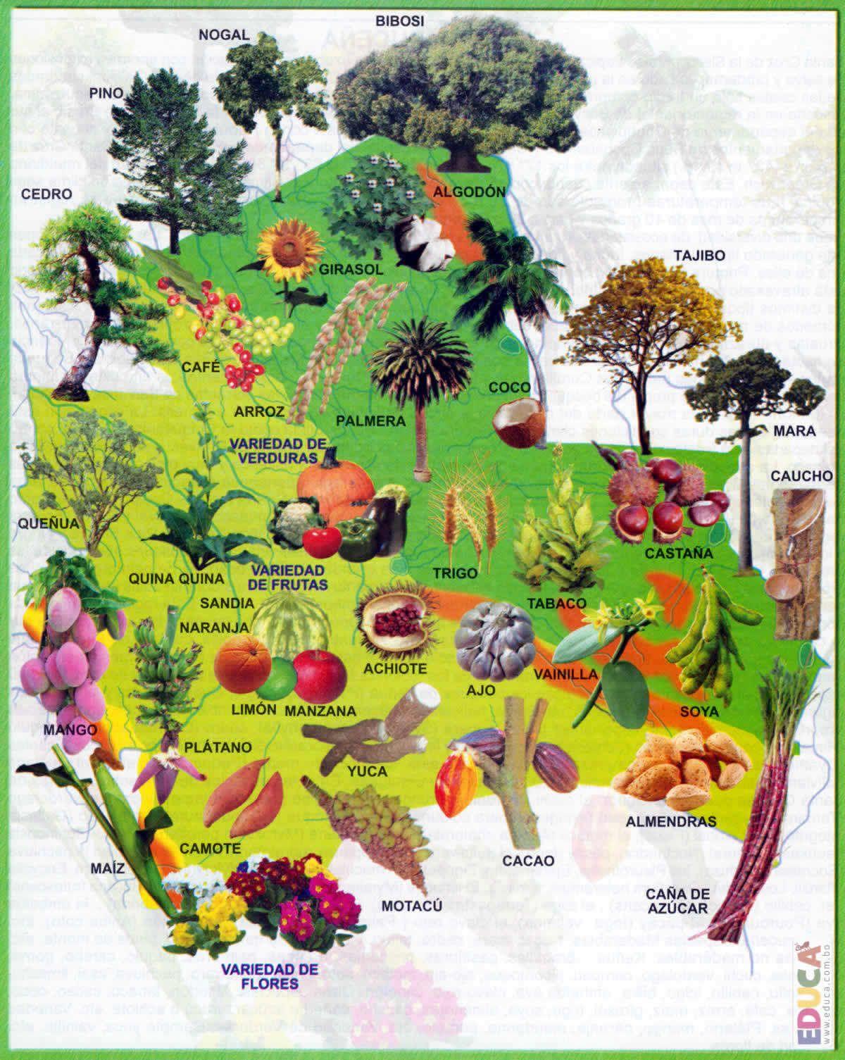 Mapa Flora Santa Cruz