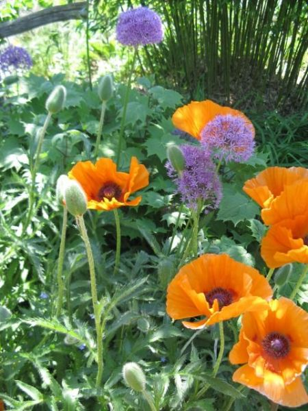 purple and orange flower garden Purple and orange | Nature Scapes and Miracles | Pinterest