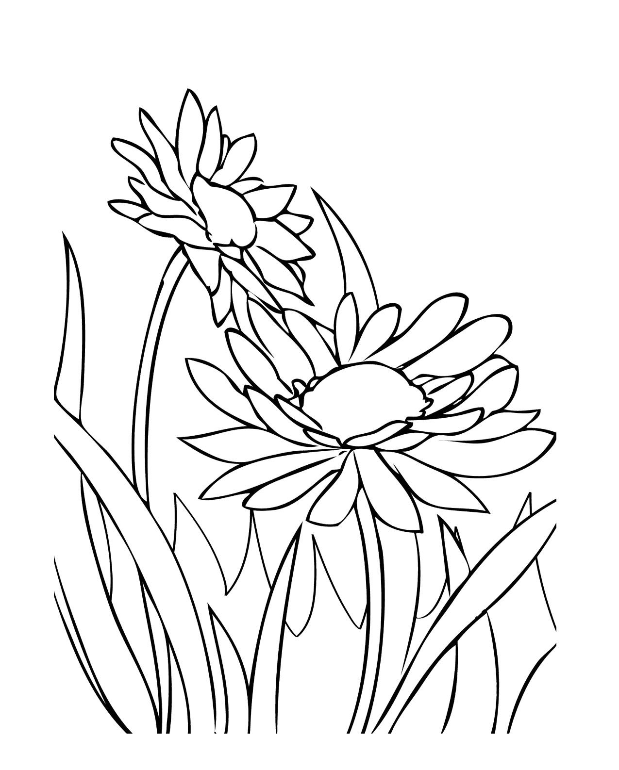 Growing Spring Flowers Coloring Pages