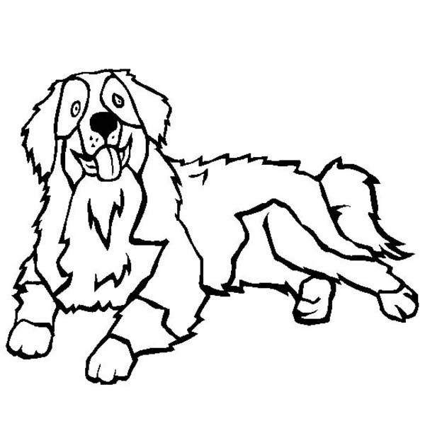 Bernese Mountain Dog Coloring Pages Berner Love Pinterest