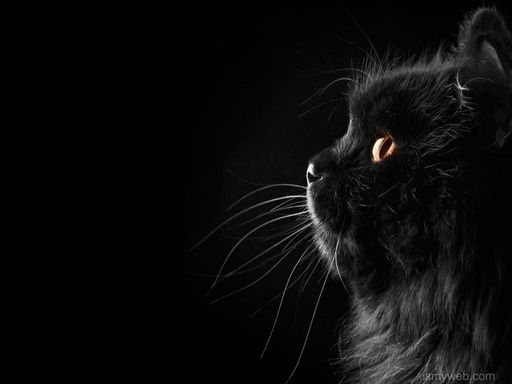 black cat animal hd wallpaper download 1 | wallpaper | pinterest