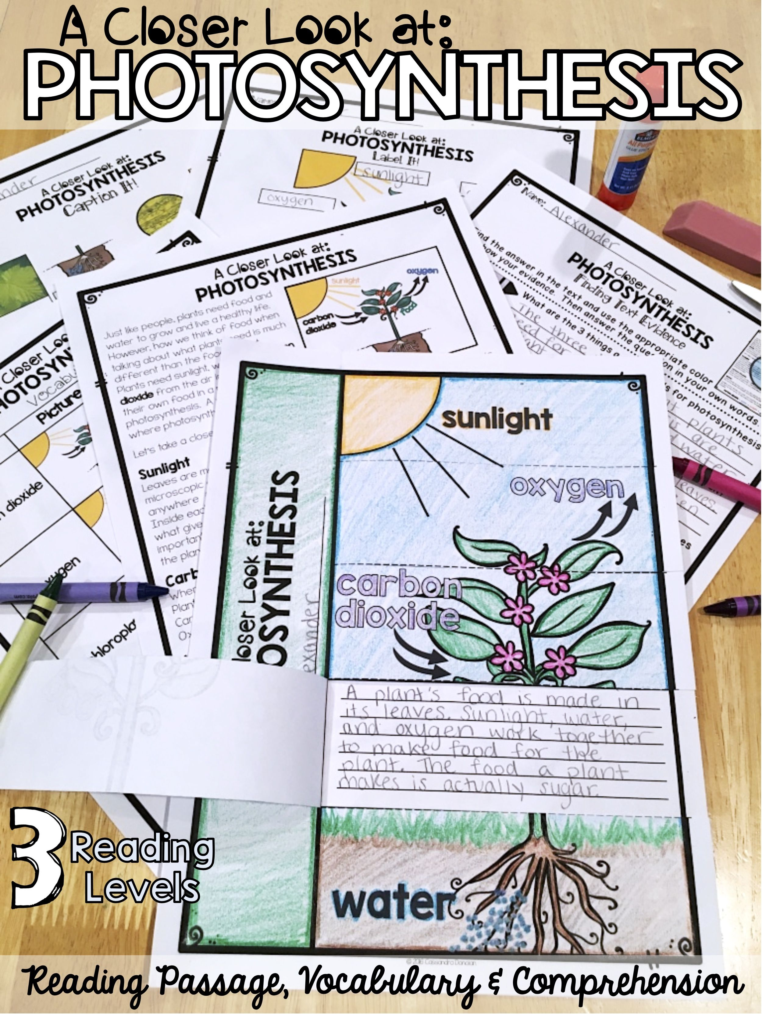 Plants Differentiated Photosynthesis Reading Passage Vocabulary Amp Comprehension