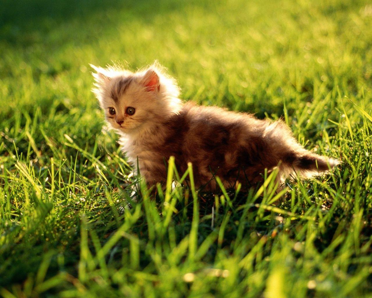 kittens in grass - google search | awwwwww <3 | pinterest