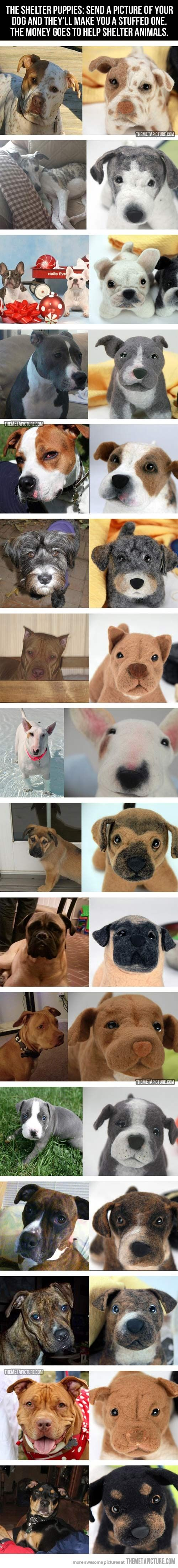 images about so cute on Pinterest American bullies Kittens
