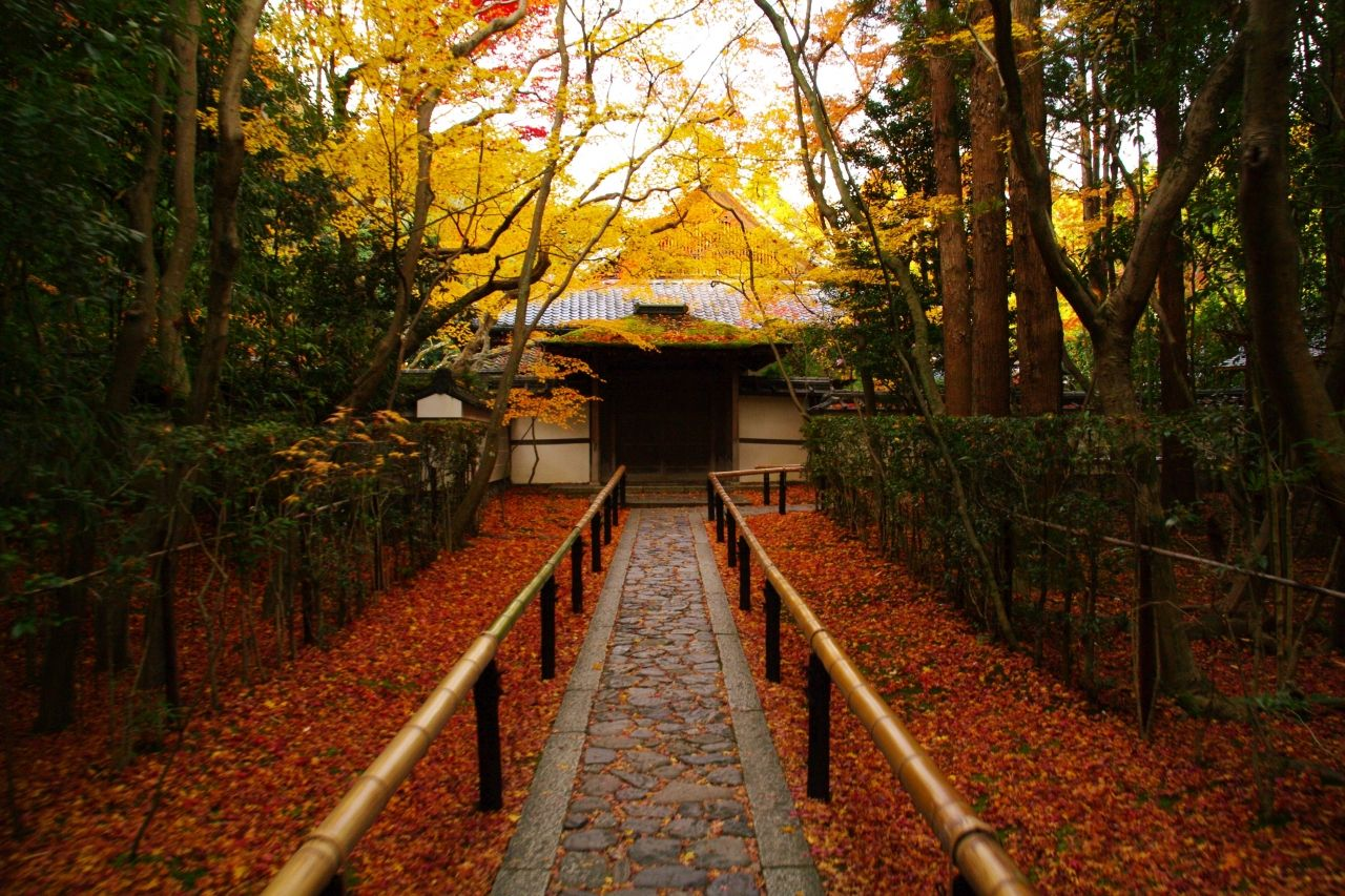 大徳寺高桐院 紅葉