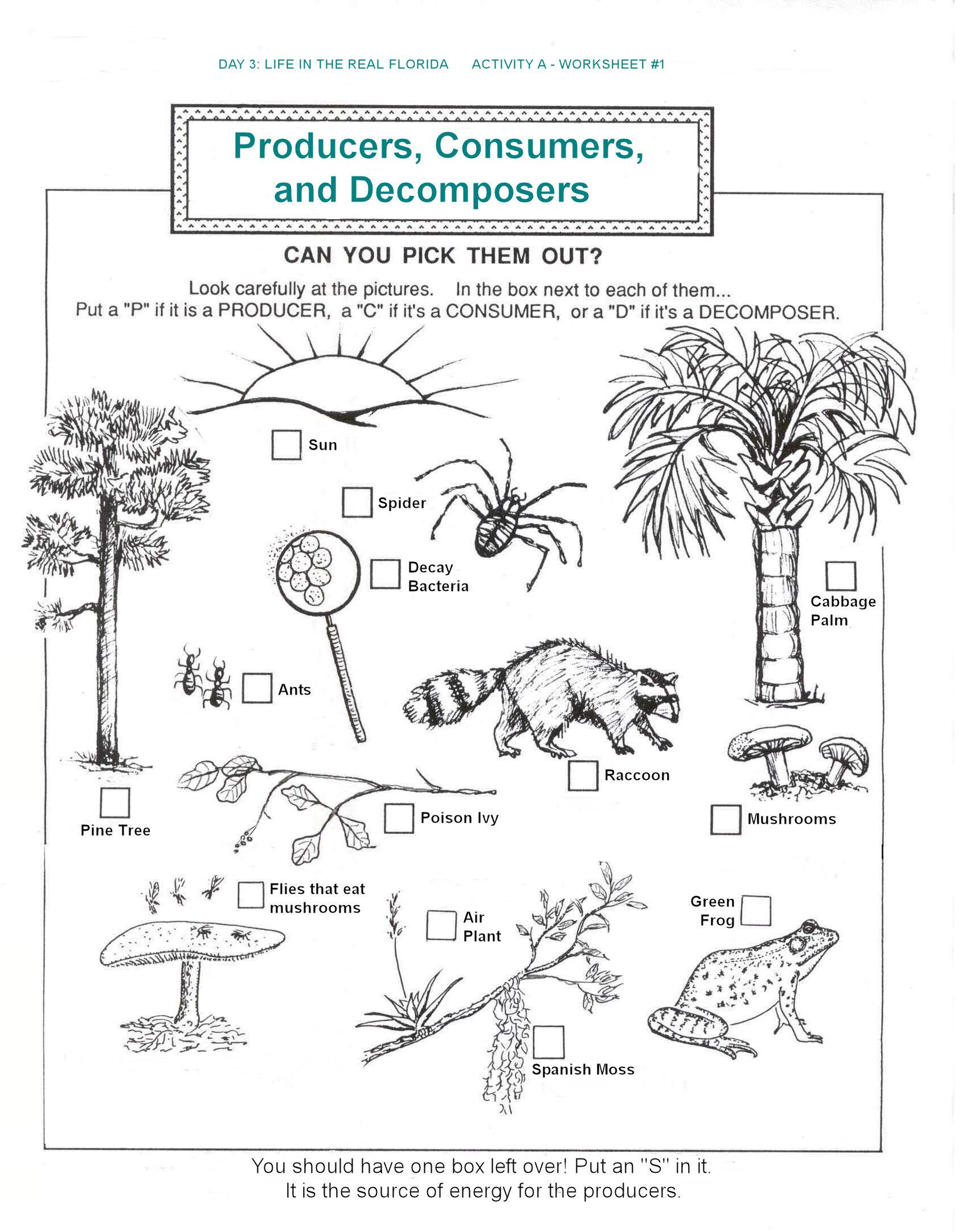 Producers Consumers And Decomposers Worksheet Free Worksheets Library