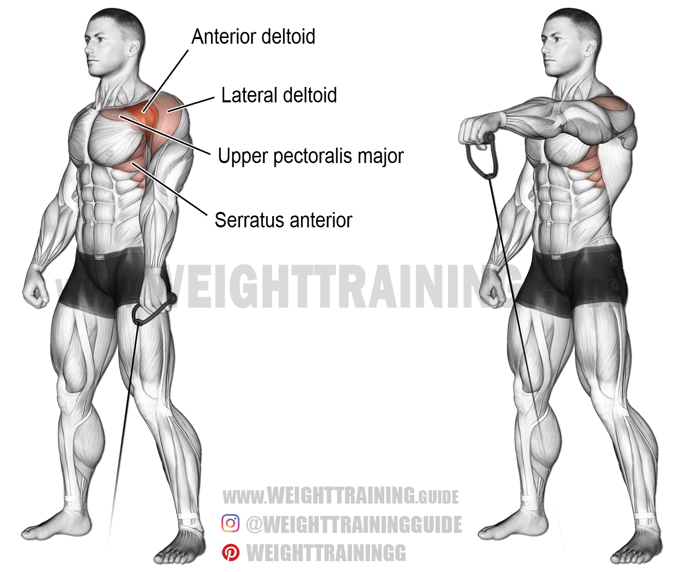 Cable One Arm Front Raise A Unilateral Isolation Exercise Target Muscle Anterior Deltoid