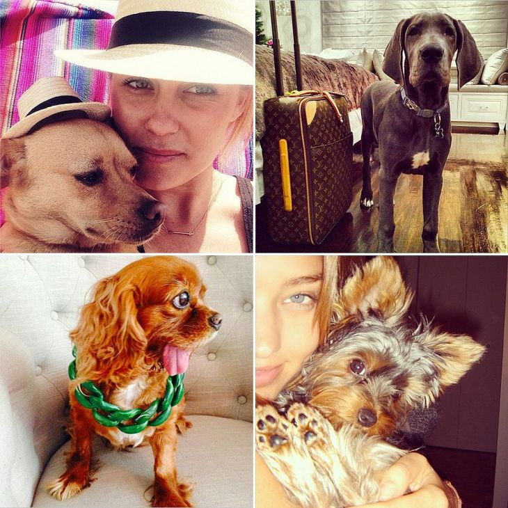 The Most Fashionable Dogs on Instagram PopSugar The oujays and
