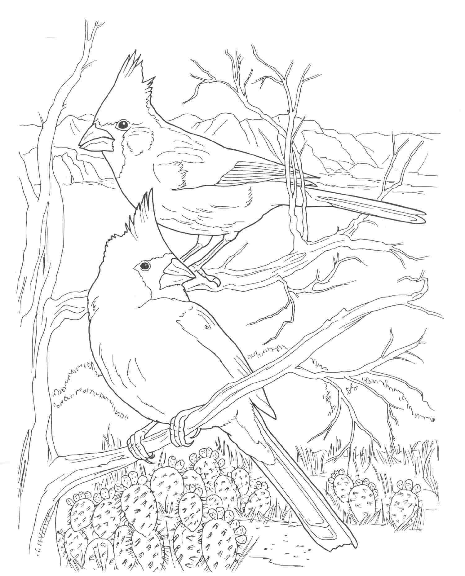 Cardinals Sketches Pinterest Cardinals Christmas Village