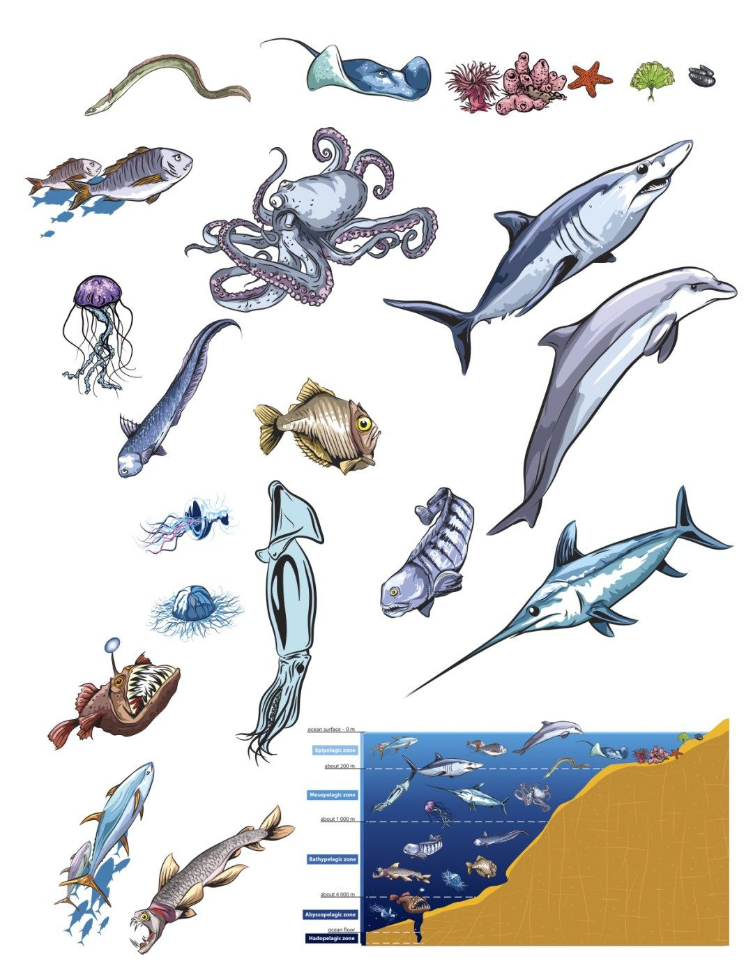 Ocean Zones Poster With Free Creature Printable