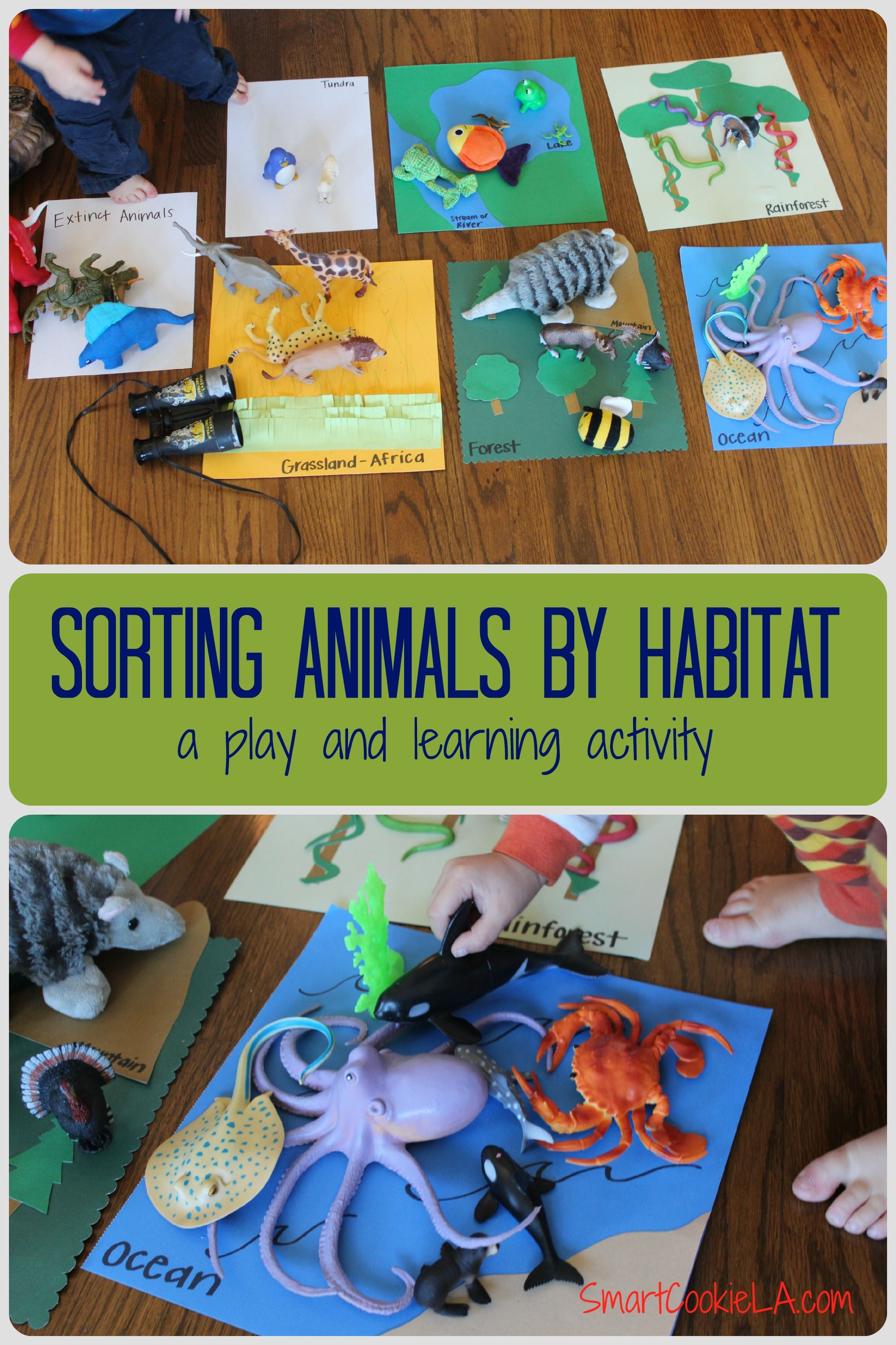 Sorting And Classifying Animals Into Their Habitats