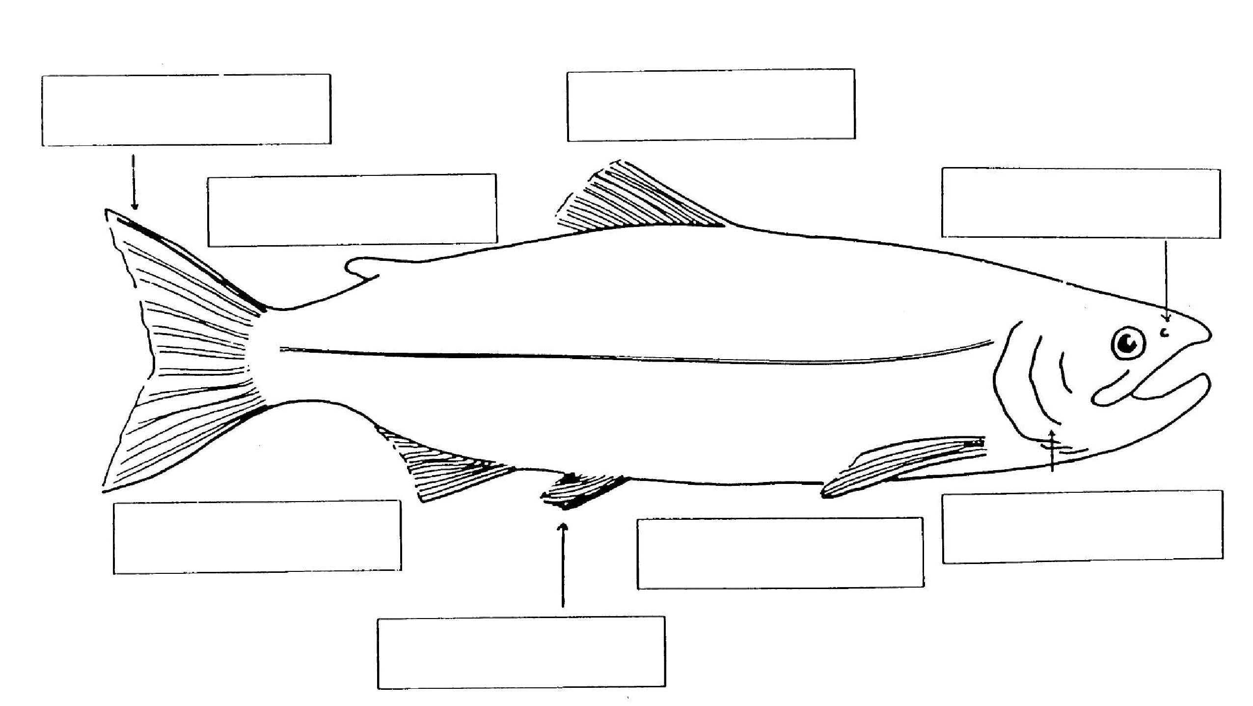 Types Of Fish And Their Habitats Worksheets