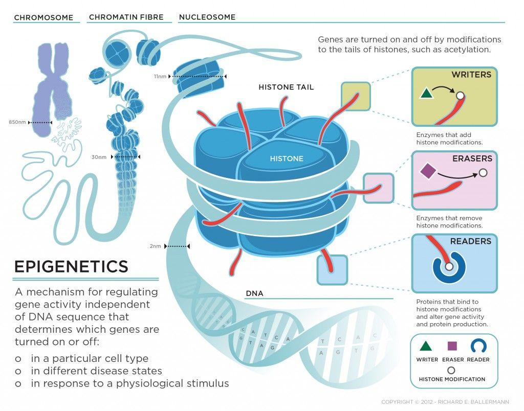 Epigentics Illustrated Diagram