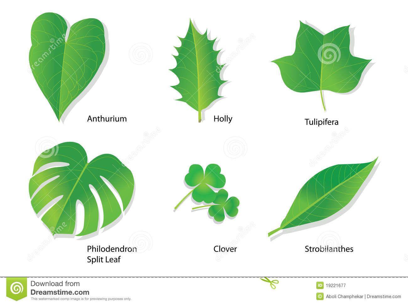 Tropical Leaves Botanical Names 972