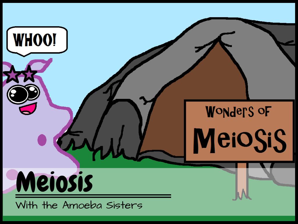 Amoeba Sisters Video With Worksheet
