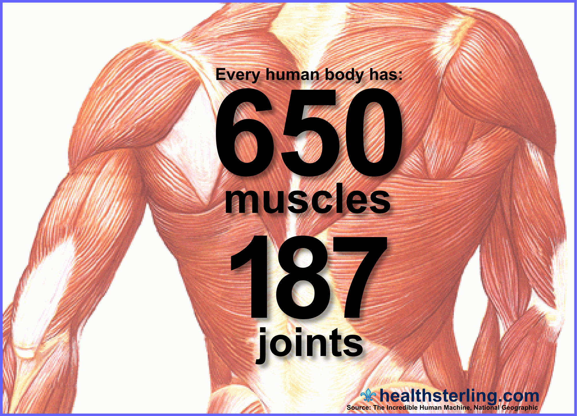 Your Body Is Amazing Over 650 Skeletal Muscles Working Together Yield Your Bilaterally
