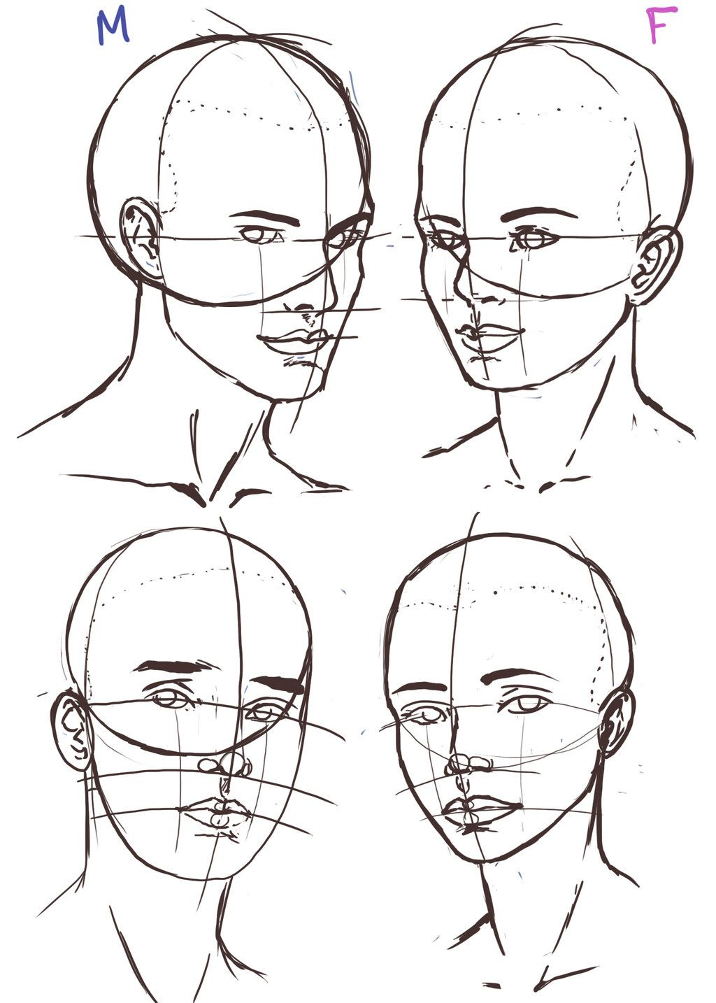 Female Head Drawing Reference