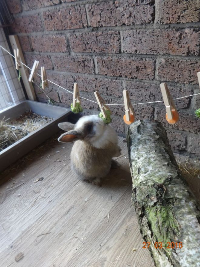 Bunny rabbit diy toy peg line bling boredom buster