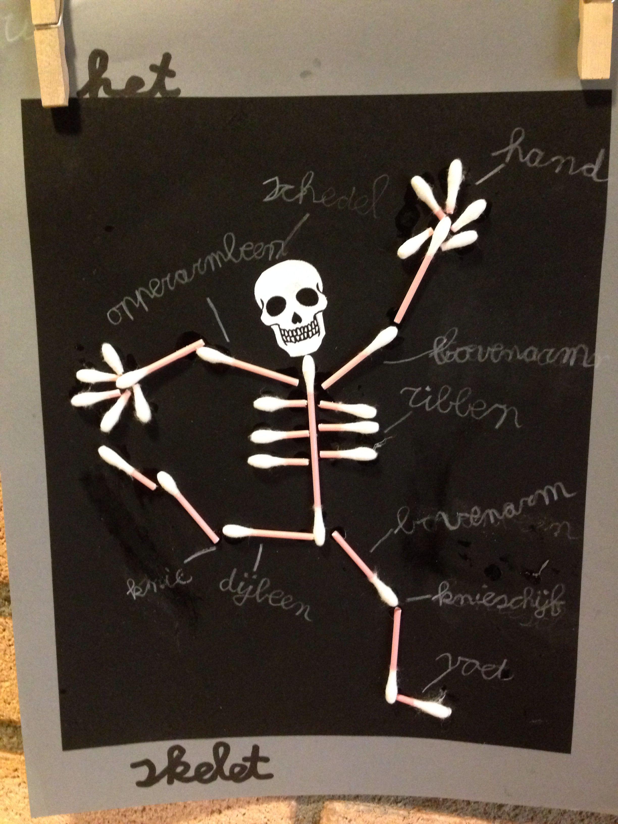Menselijk Lichaam Skelet Knutselen Groep 4 5