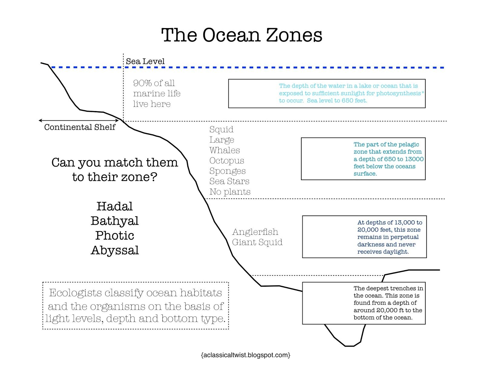 Ocean Floor Diagram Worksheet Answers