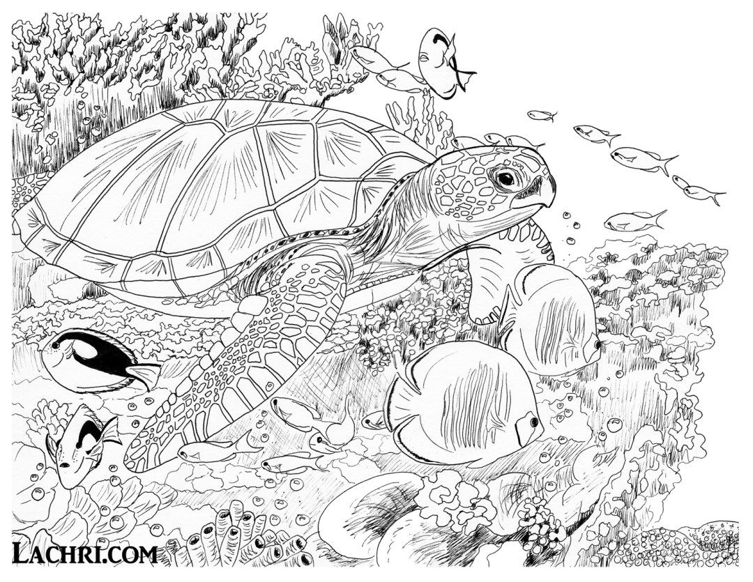 Color This Sea Turtle Underwater Scene Yourself In My Free