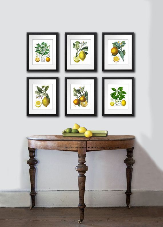 set of 6 vintage orange lemon citrus fruits antique botanical prints tropical summer decor wall on kitchen decor paintings prints id=65943