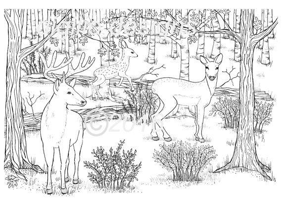 Erwachsenen Coloring Seite Hirsch Woodland Wald Rotwild In
