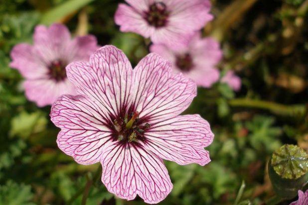 Beautiful flowers pics with names wallsmiga beautiful flowers cultivar names mightylinksfo
