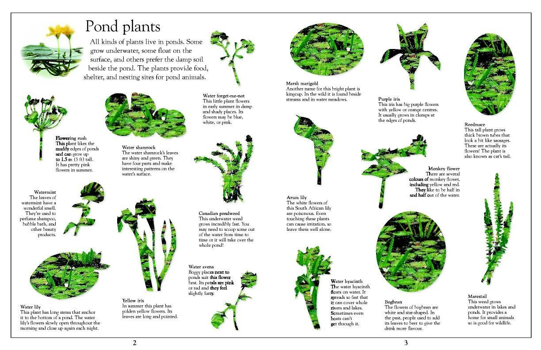Ponds Plants