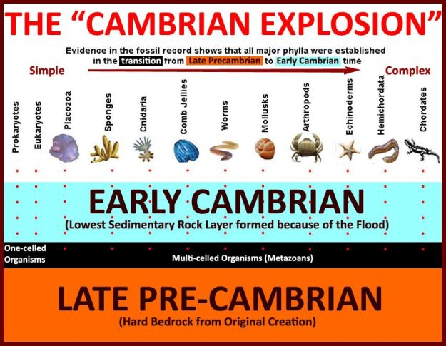 Image result for cambrian explosion