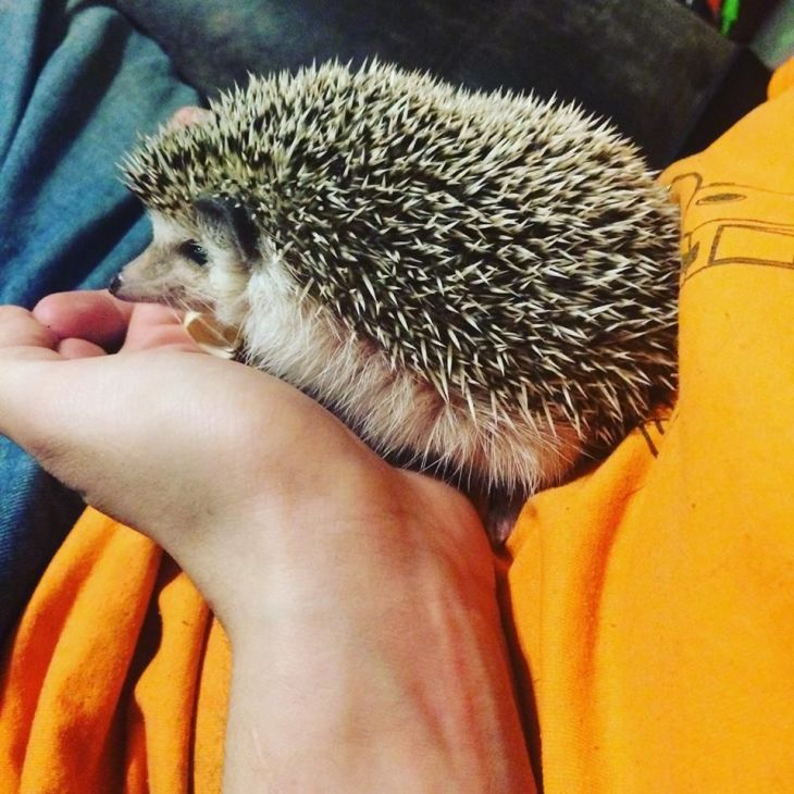 Our hedgehog Prudy Things I Have Done and Made Pinterest