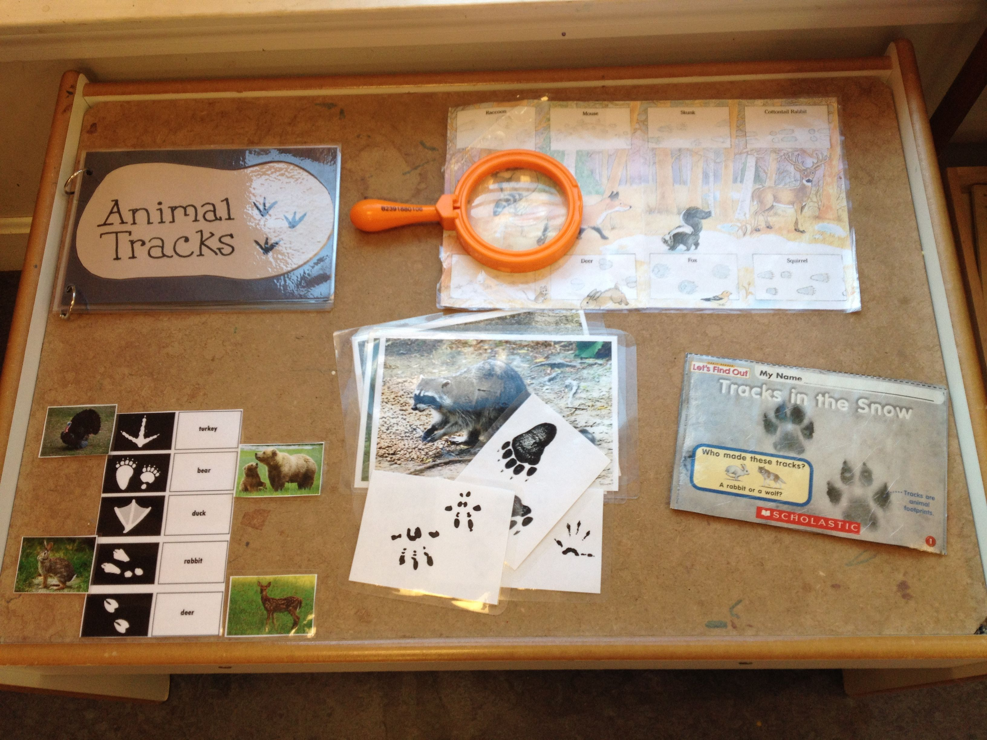 Hibernation Preschool Science Table