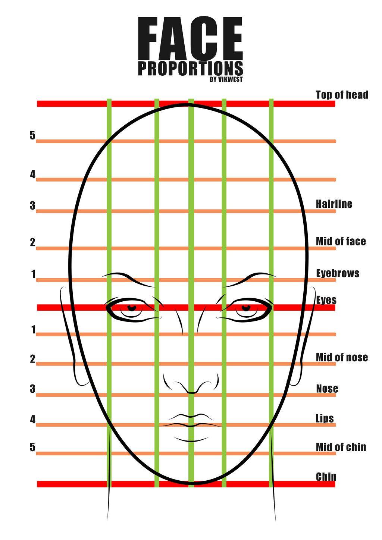 Female Face Proportions By Vik Westviantart On Deviantart