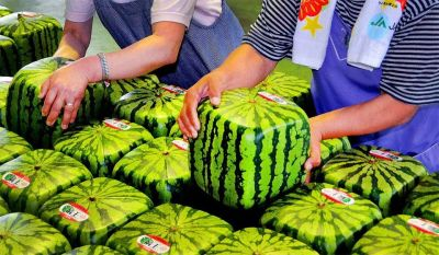 factgasm,square watermelon