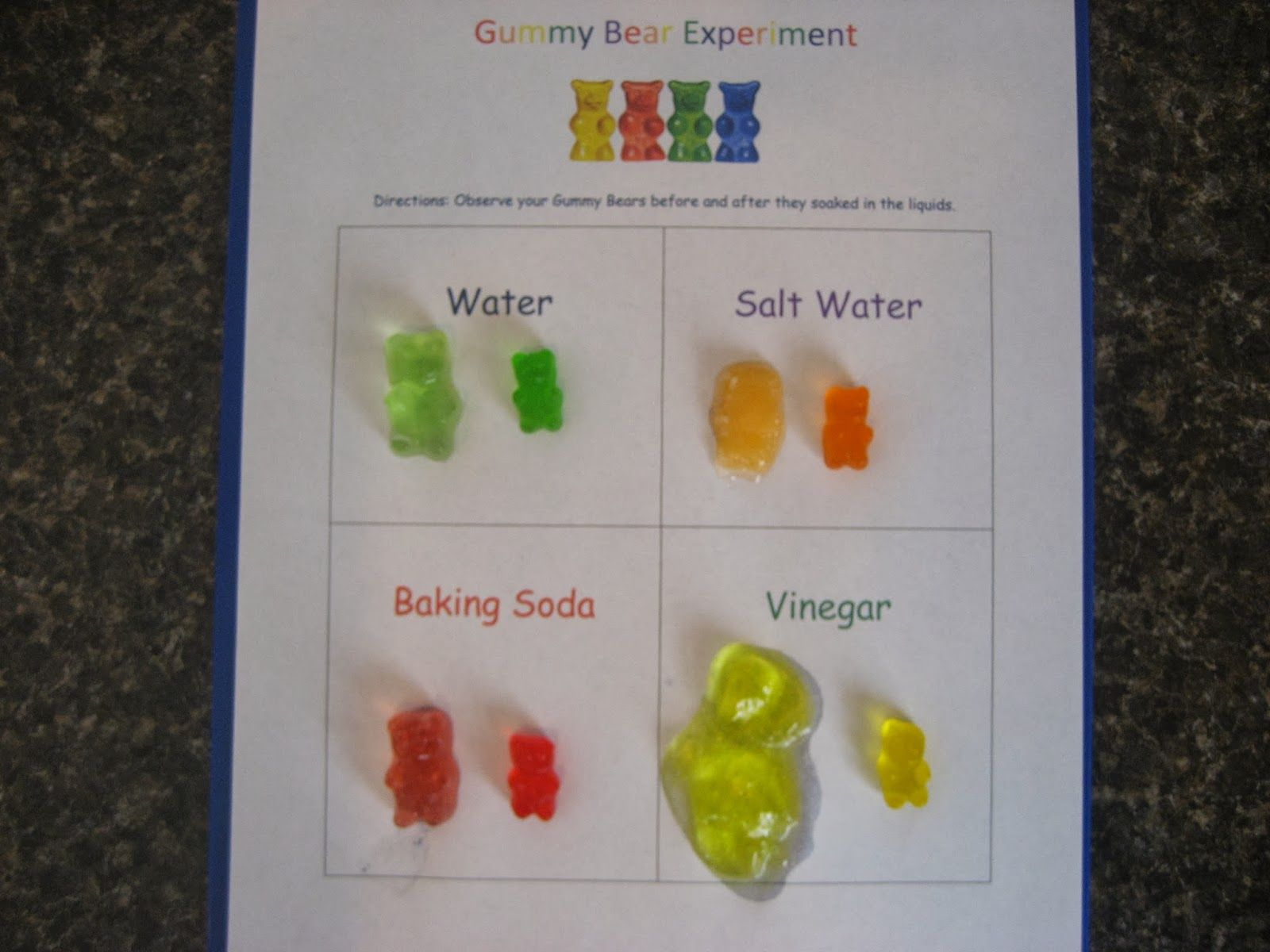 Gummy Bear Science Worksheets