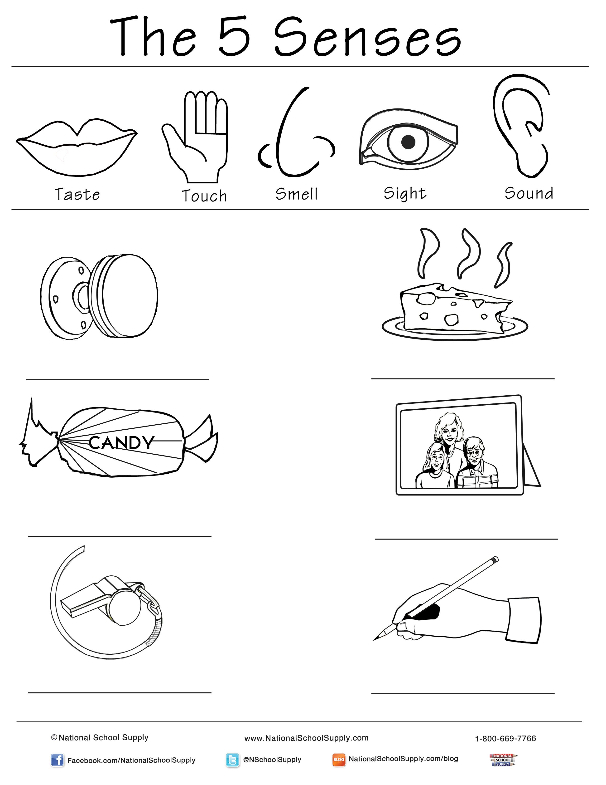 New 5 Senses Printable Is Great For Classrooms Of All Ages