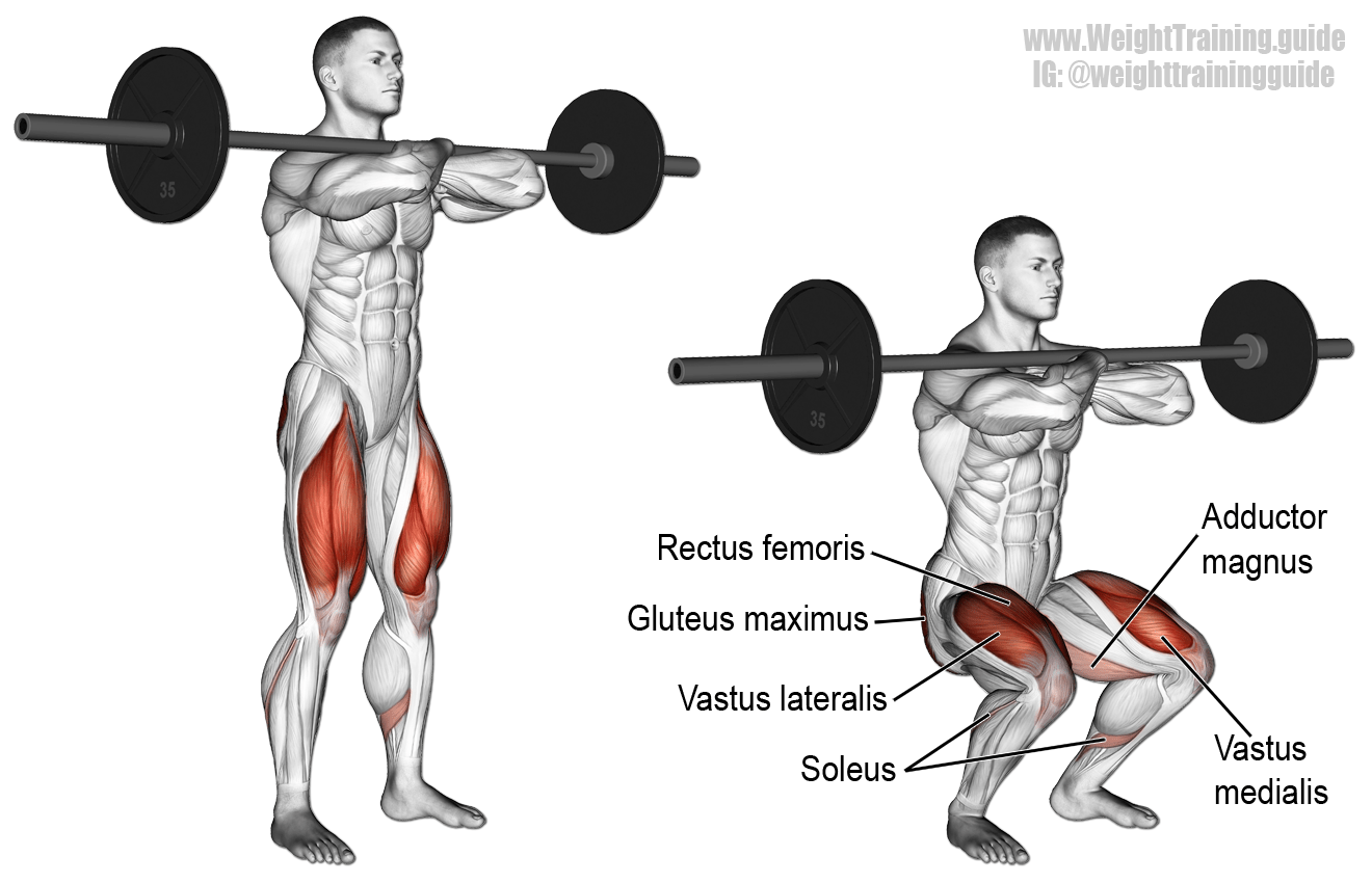 Muscle Worksheet Front And Back