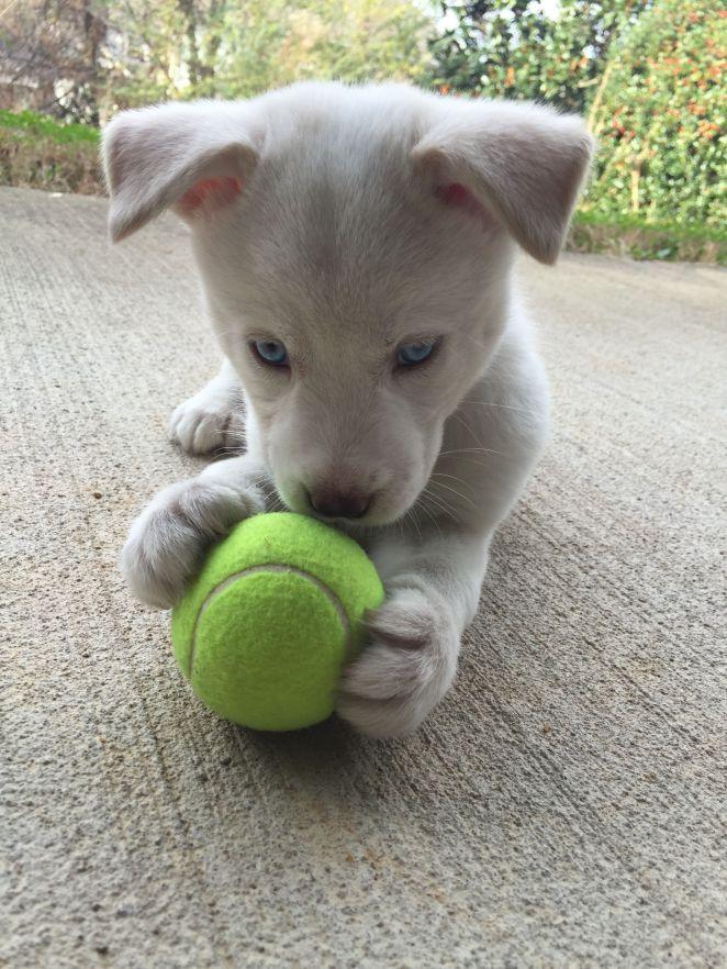 Resultado de imagen para adopted puppies