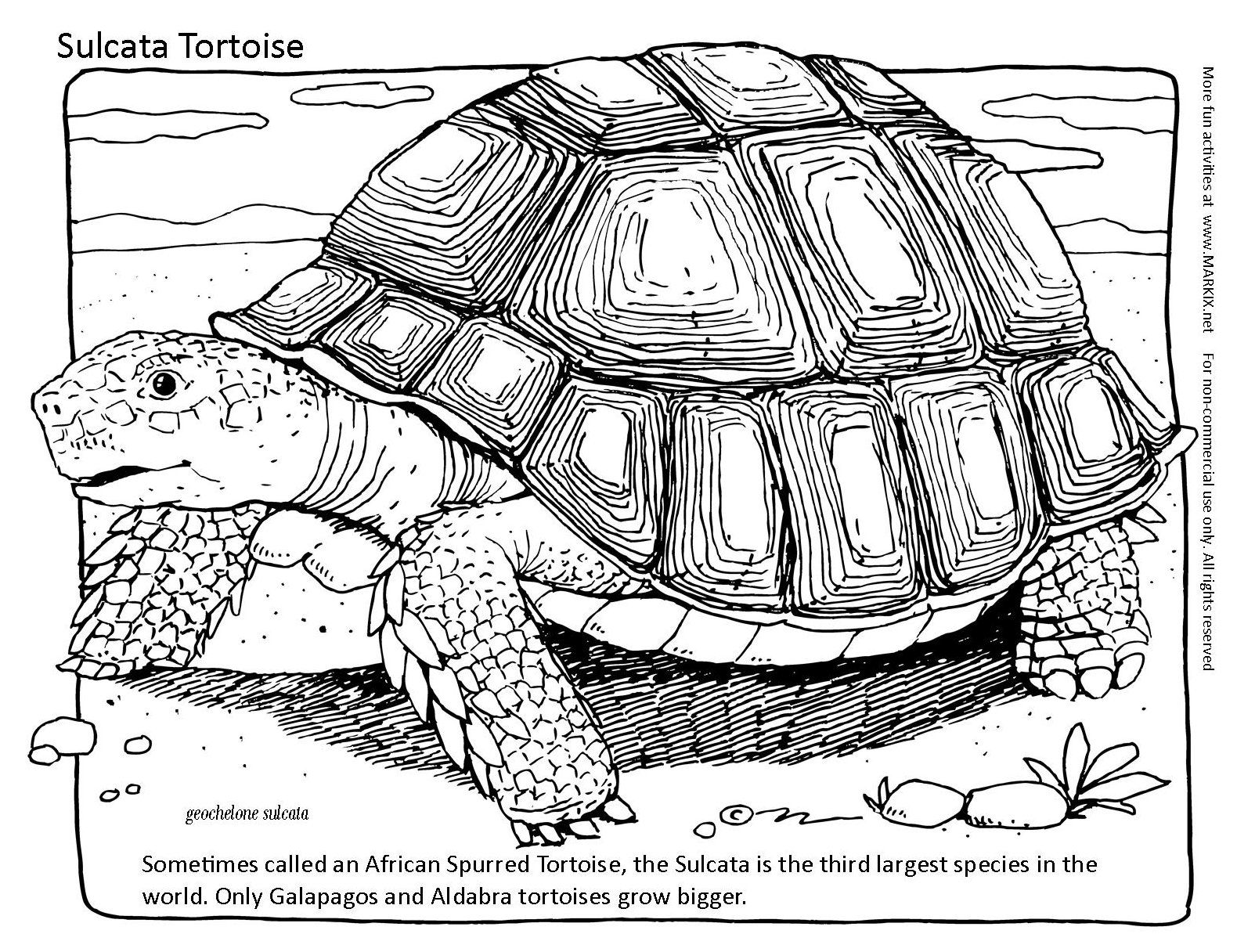 Galapagos Tortoise Coloring Pages
