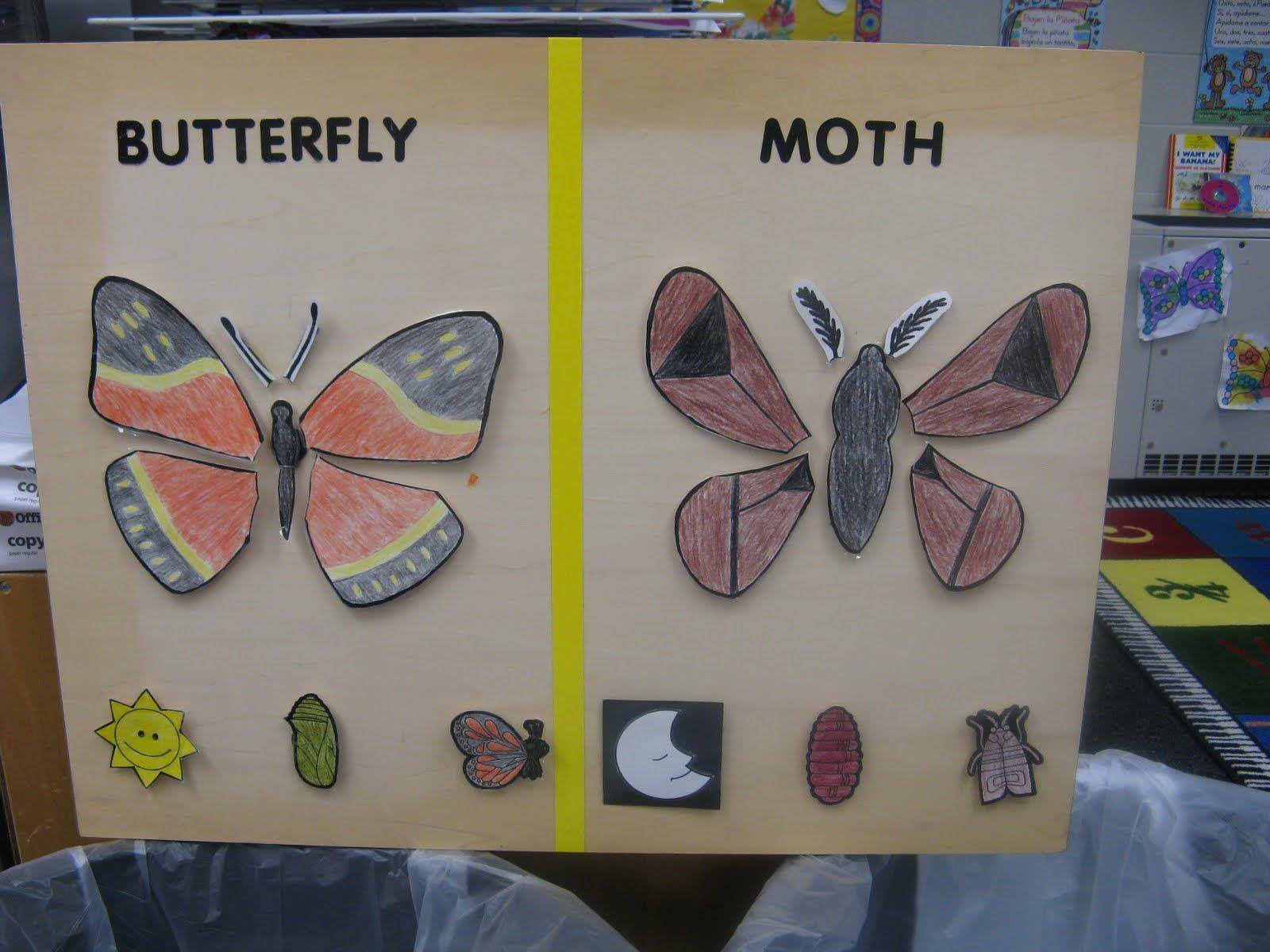 Butterfly Vs Moth