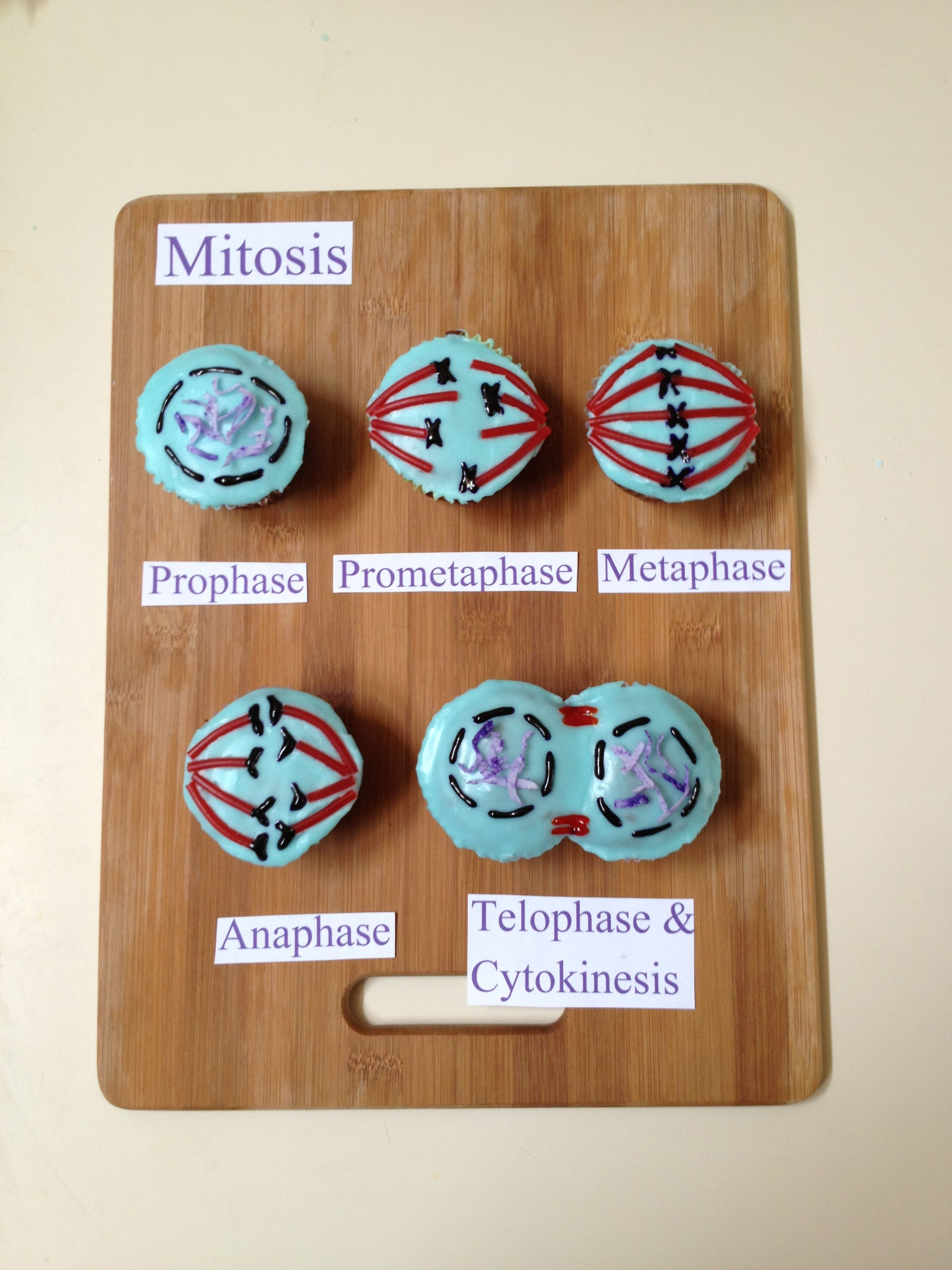 Mitosis Cupcakes Yes I Wish I Made These When I Was In