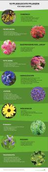 Schön Steingarten Pflanzenauswahl Design