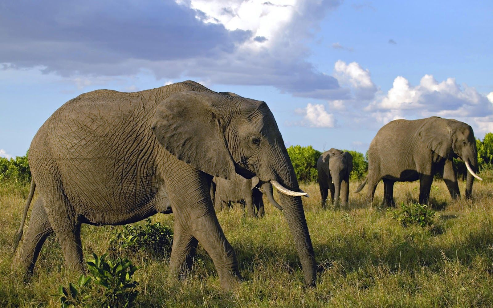 elephant wallpaper elephant wallpapers elephant hd wallpapers 1440