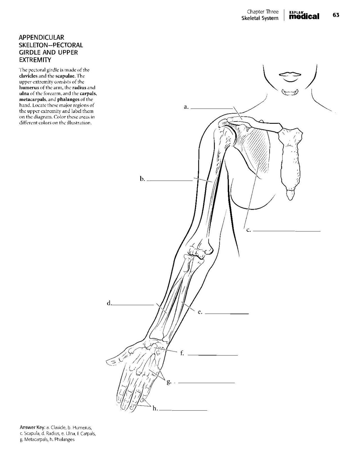 The Anatomy Coloring Book Pdf Wynn Kapit | Fun Coloring Pages