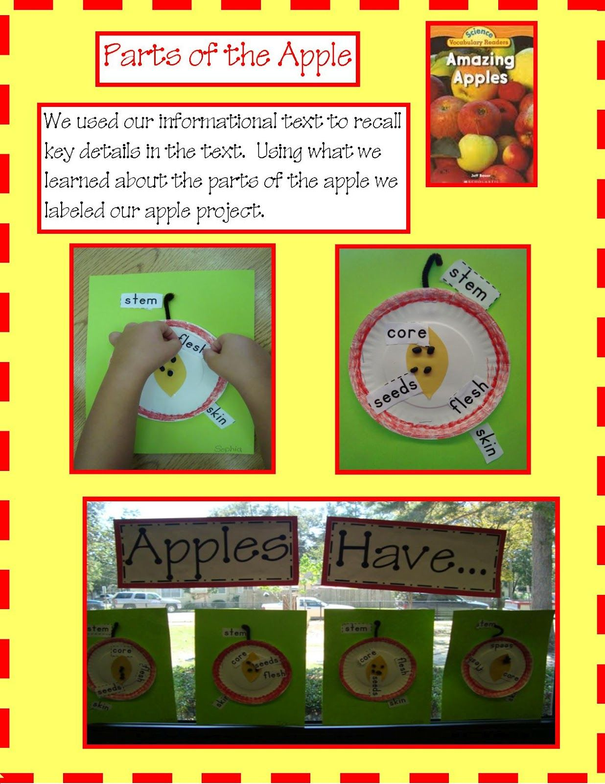 Parts Of The Apple Activity