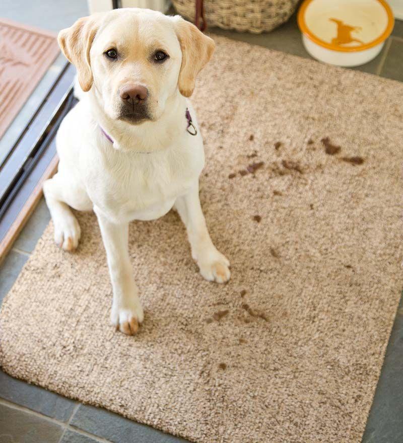 Floorsaving microfiber mud rugs absorb water and dirt