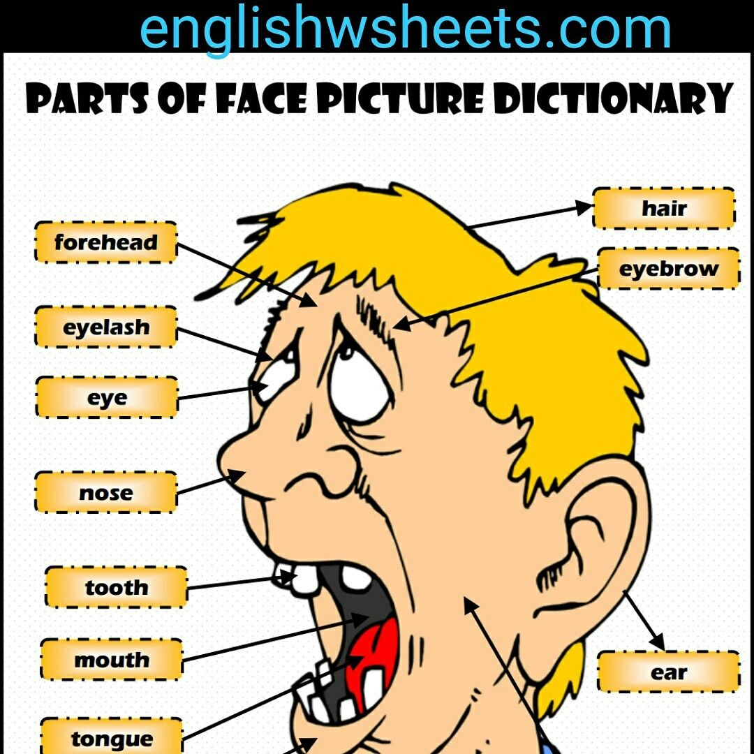 Parts Of Face Esl Printable Picture Dictionary For Kids